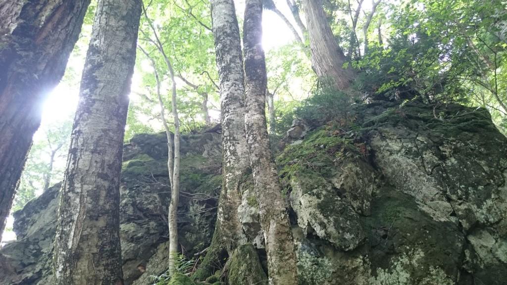 原生林と巨石群