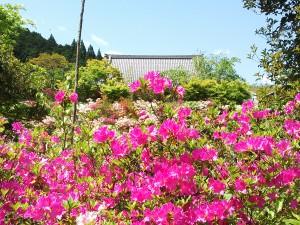 普門寺さんも花がいっぱいです