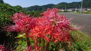 近くで見るととてもきれいな花です。