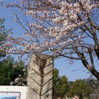 鬼瓦公園の桜